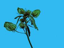 Knospe, Pflanzen, Stängel, Blätter