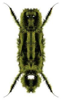 Käfer, Pelz, Kopf, Augen