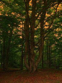 Baum, Sonnenuntergang, Äste, Laubwald