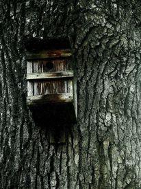 Baum, Vogelhaus, Haus, Fotografie