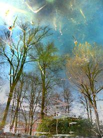 Teich, Wasser, Baum, Fotografie
