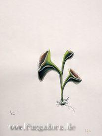 Projekt, Pflanzen, Entdeckung, Reise