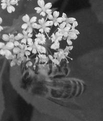 Fotoprojekt, Pflanzen, Fotografie, Blumen