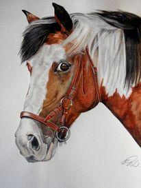 Tiere, Braun, Pferde, Schecke