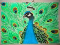 Vogel, Blau, Farben, Pfau