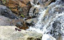 Sonnenbrille, Ferien, Wasserfall, Brille