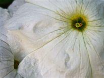 Sommer, Blumen, Makro, Fotografie
