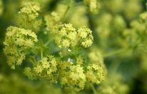 Regen, Blumen, Garten, Fotografie