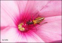 Pflanzen, Natur, Insekten, Natureart
