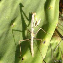 Natureart, Pflanzen, Insekten, Opunzien