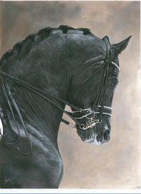 Pferde, Pferdemalerei, Totilas, Bleistiftzeichnung