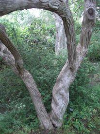 Fotografie, Pflanzen, Baum