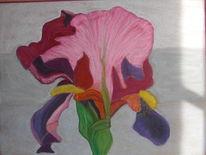Zeichnung, Iris pastellkreide, Malerei, Pflanzen