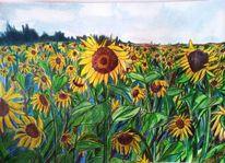 Braun, Buntstiftzeichnung, Sonnenblumen, Grün