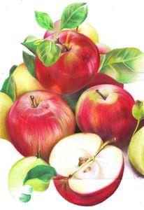 Apfel rot polychromos, Zeichnungen, Stillleben