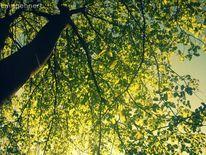 Sonne, Grüne blätter, 2o12
