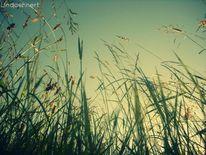 Feld, Gras, Natur, 2o12