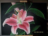 Farben, Lilie, Acrylmalerei, Pflanzen