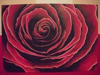 Rose, Blumen, Acrylmalerei, Malerei