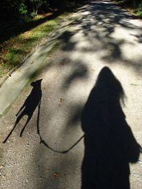 Schatten, Hund, Fotografie, Wald