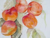 Obst, Aquarellmalerei, Aprikose, Stillleben