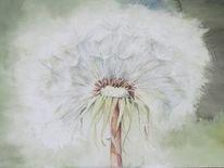 Blumen, Natur, Aquarellmalerei, Pusteblumen