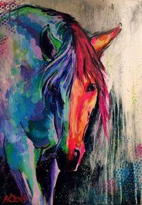 Pferde, Bunt, Reiter, Portrait