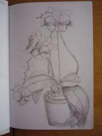 Bleistiftzeichnung, Blumen, Orchidee, Skizze