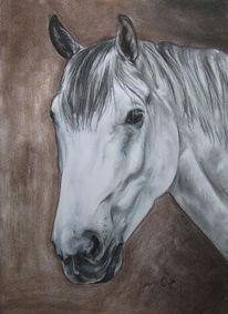 Pferdekopf, Pferde, Tiere, Schimmel