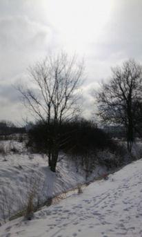 Landschaft, Baum, Schnee, Sonne