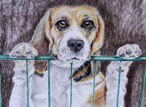 Haustier, Hund, Beagel, Malerei