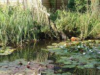 Teich, Blumen, Seerosen, Natur