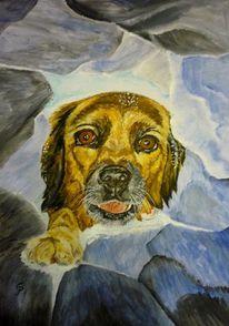 Tiere, Haustier, Lavinenhund, Rettung