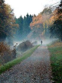 Nebel, Ludwigskanal, Landschaft, Herbst