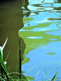 Pflanzen, Grashalme, Wasser, Kalte farben