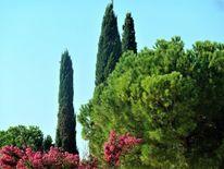 Gardasee, Baum, Zypressen, Sommer