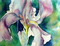 Aquarellmalerei, Schwertlilie, Iris, Blumen