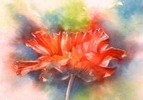 Mohn, Rot, Klatschmohn, Aquarellmalerei