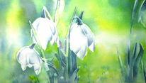 Blumen, Aquarellmalerei, Frühblüher, Märzenbecher