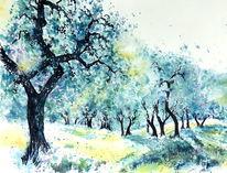 Olive grove, Italien, Aquarellmalerei, Olivenbaum