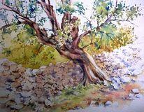 Aquarellmalerei, Oliv, Baum, Kroatien
