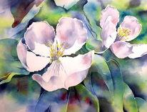 Quitten, Quince blossom, Blüte, Aquarellmalerei