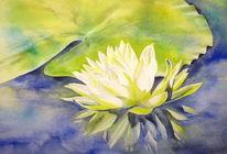Wasser, Grün, Seerosen, Blumen