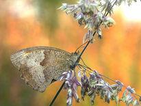 Makrofotografie, Schmetterling, Flammender horizont, Natur