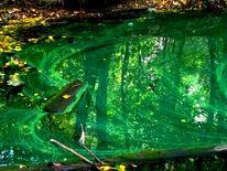 Grün, Wald, Wasser, Pflanzen