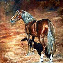 Präriepferd, Pferd mit halfter, Braunes pferd, Mustang