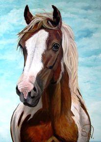 Pferde, Braun, Wild, Tiere