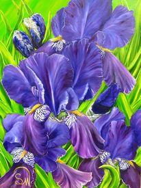 Blüte, Blumenwiese, Irisblüte, Blumen