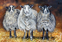 Stroh, Lamm, Schafwolle, Schaf