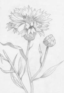 Blumen, Bleistiftzeichnung, Blüte, Pflanzen
